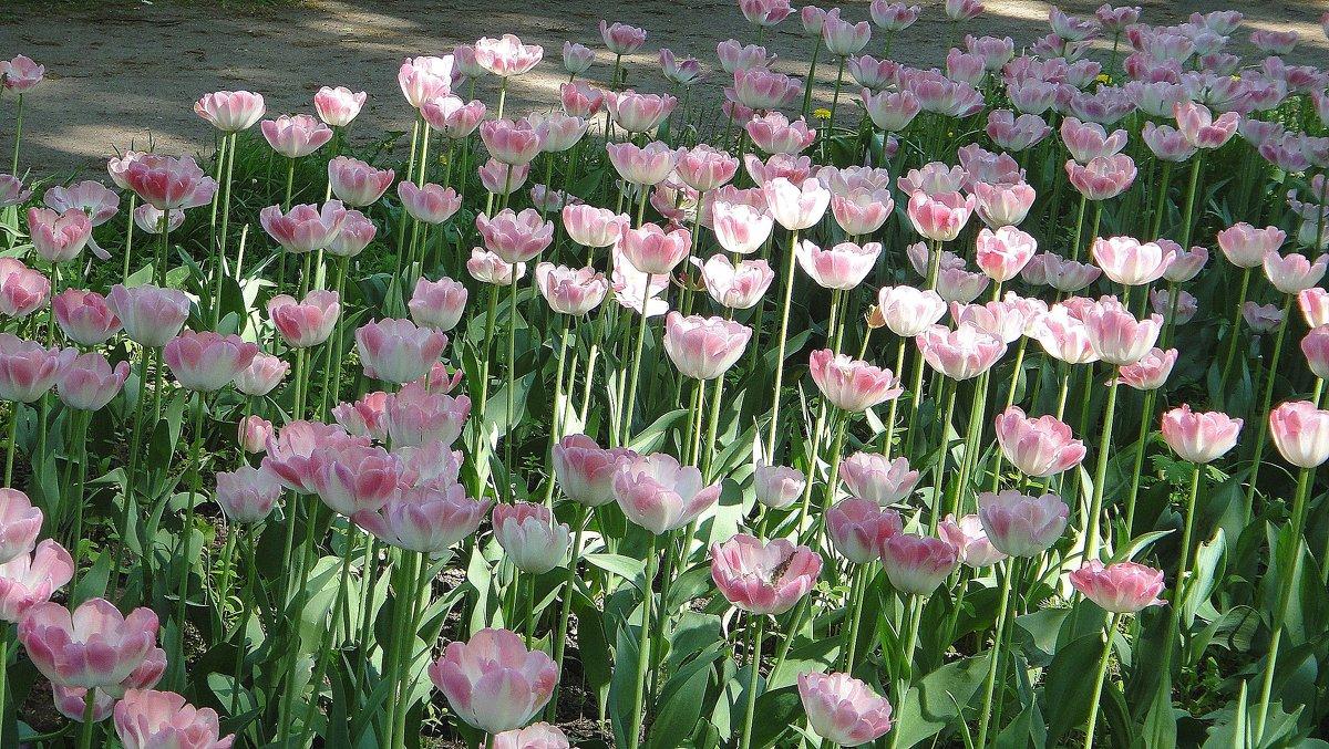 В розовых тонах - Елена Павлова (Смолова)