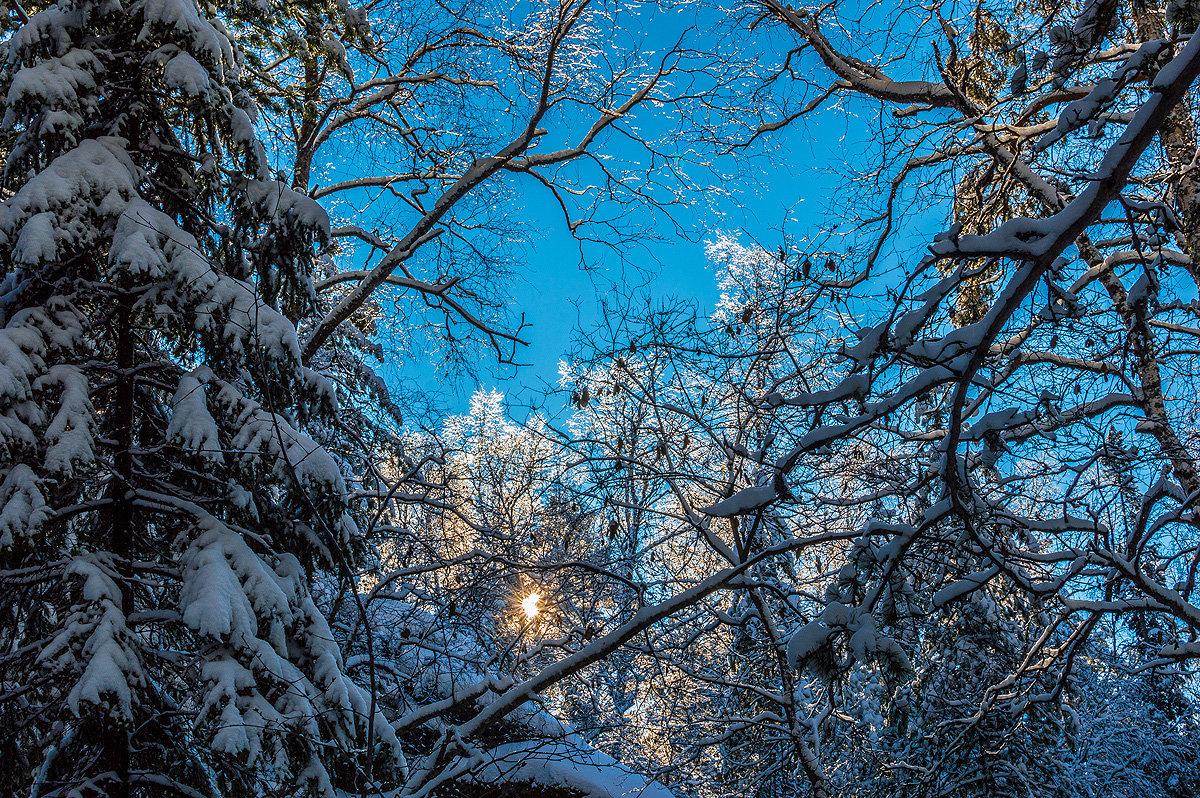 Небеса сквозь веток вязь - Андрей Поляков