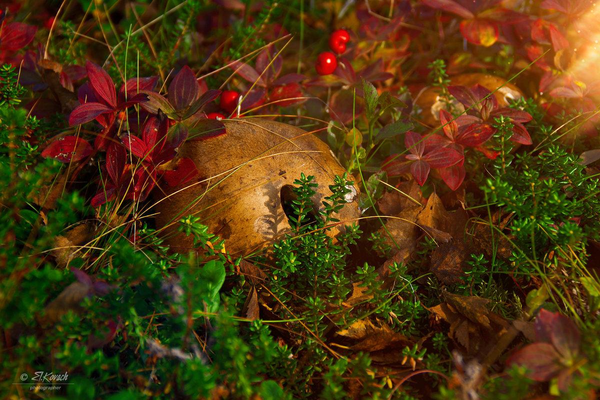 Осенний лес - Elena Kovach