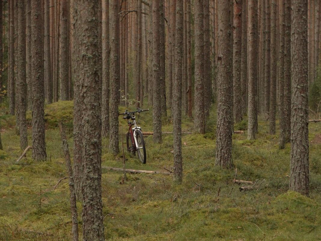 металл и дерево - Михаил Жуковский