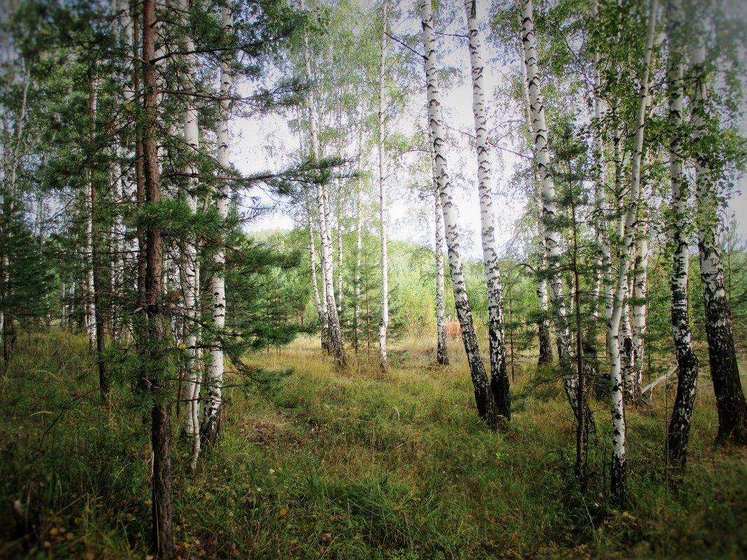 В лесу... - Valentina