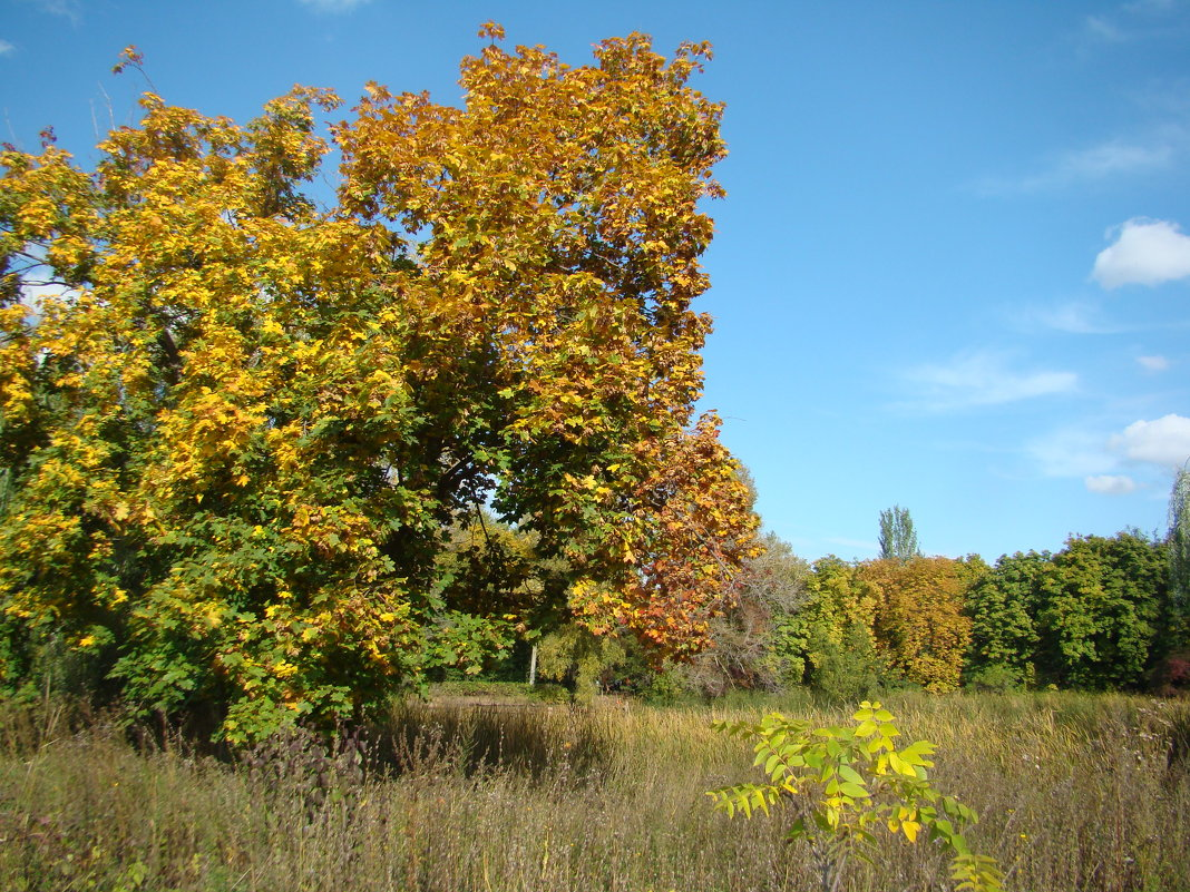 Осенний день - марина ковшова