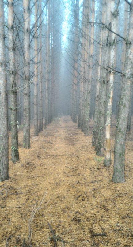 Туман - Дмитрий
