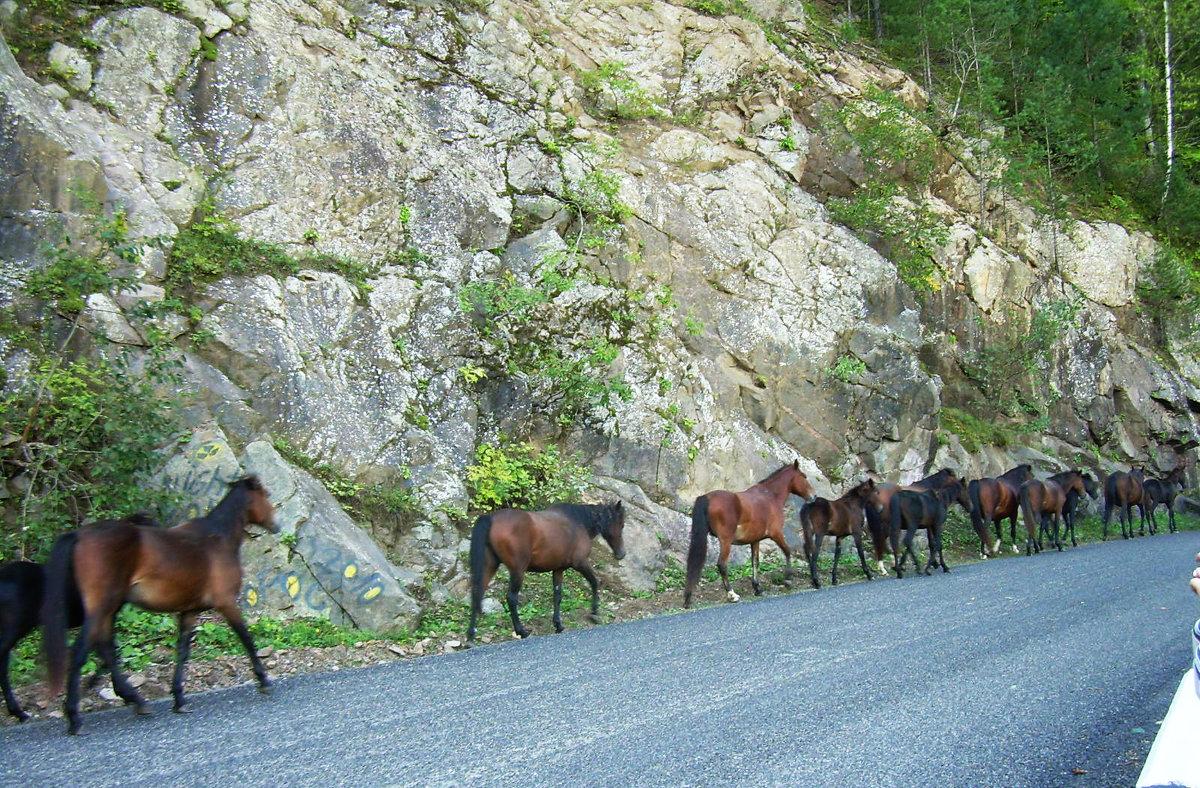 Путь на горное пастбище - Надежда