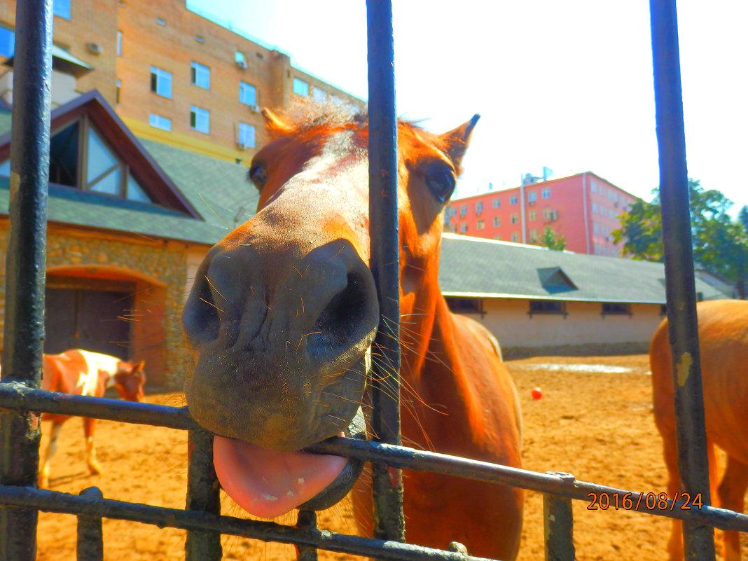лошадь - Таня