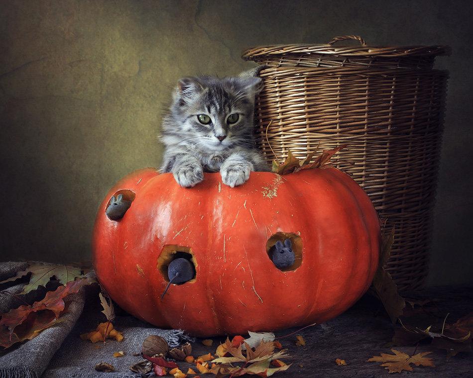Кошки-мышки - Ирина Приходько
