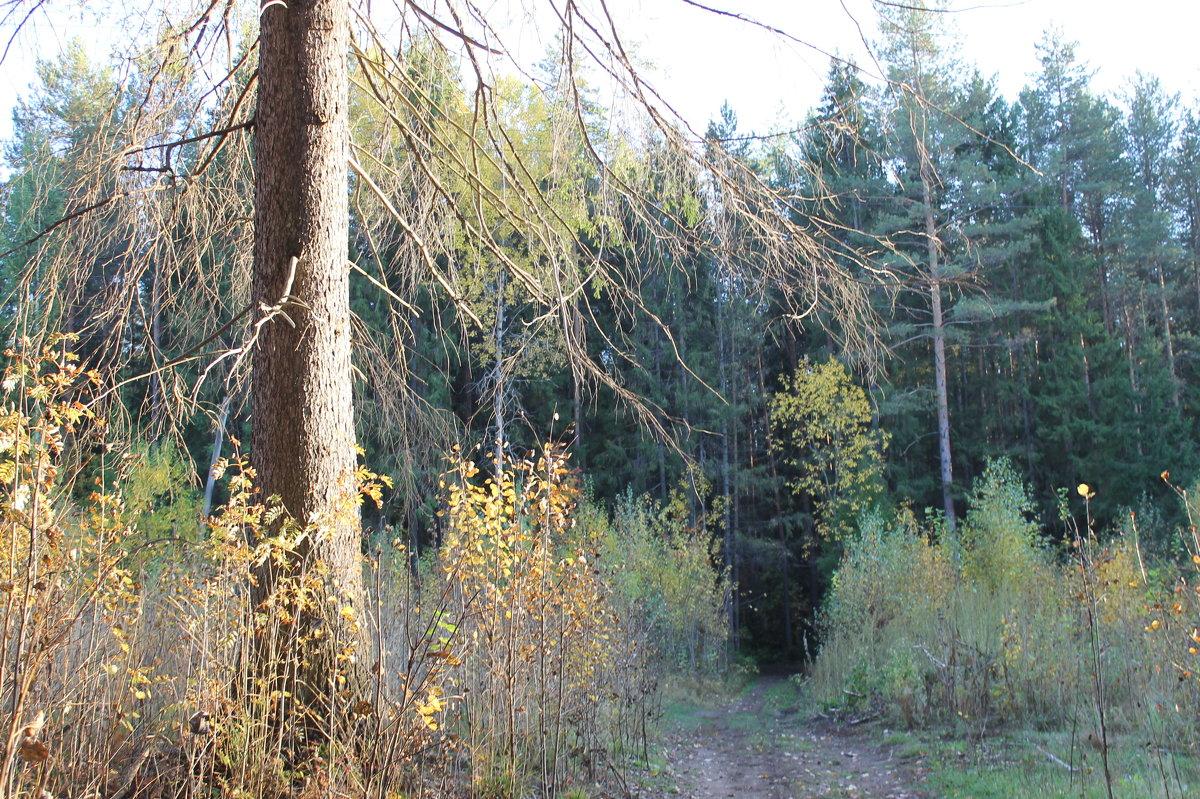 осень в Прикамских лесах - Валерий Конев
