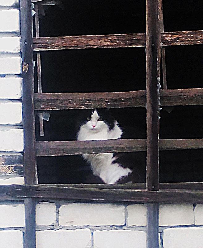 кошкин дом.... - александр дмитриев