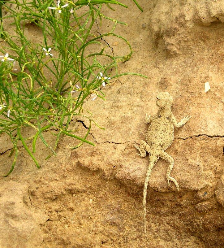 Животные Туркменистана - ящерица - Elena Соломенцева