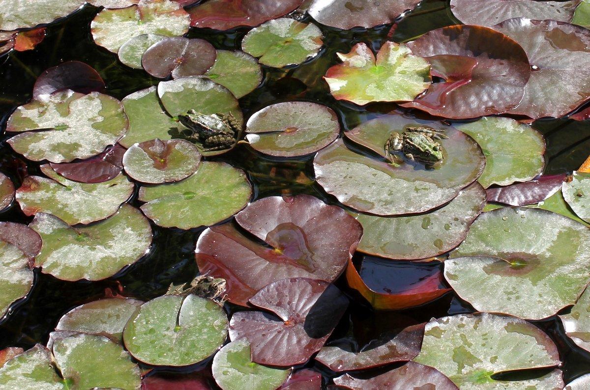 Животные Туркменистана - жабы - Elena Соломенцева