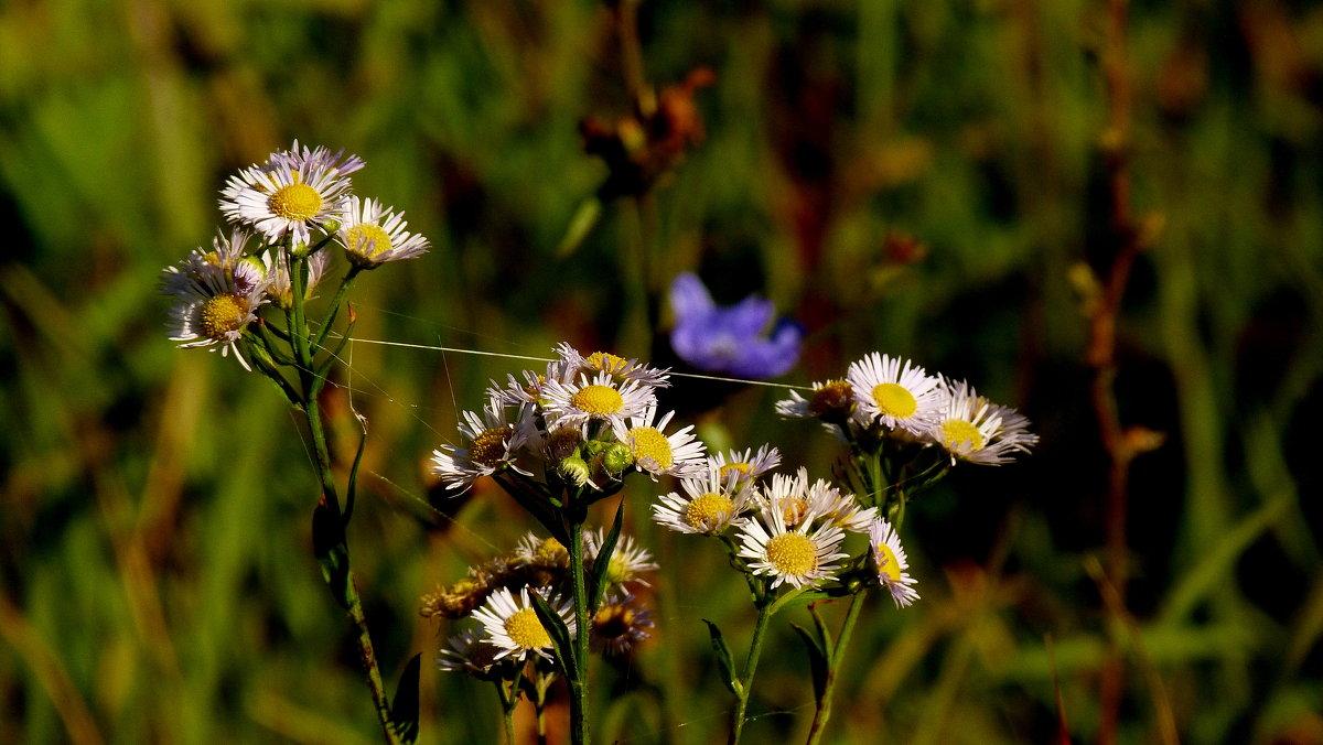 цветы осени 5 - Александр Прокудин