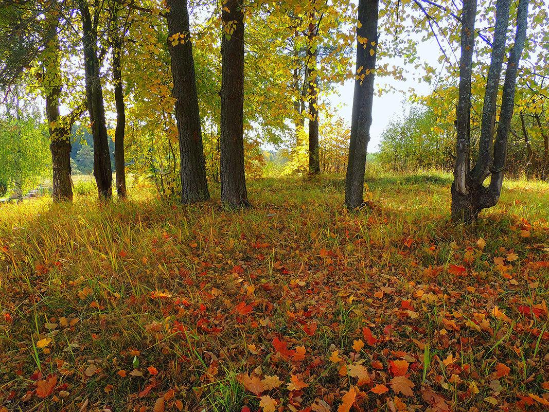 На ковре из желтых листьев - Павлова Татьяна Павлова