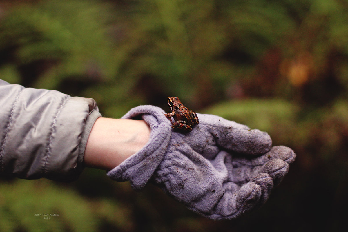 Обитатели леса - Анна Фрошгайзер