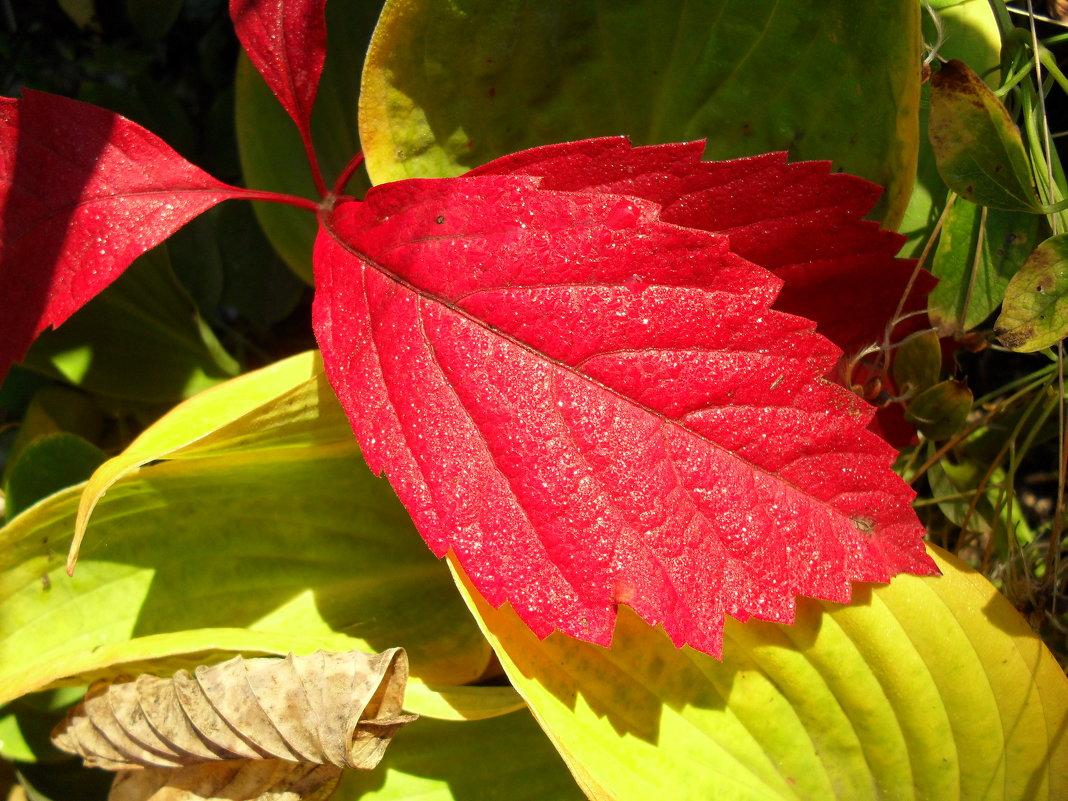 Красный лист - Анатолий