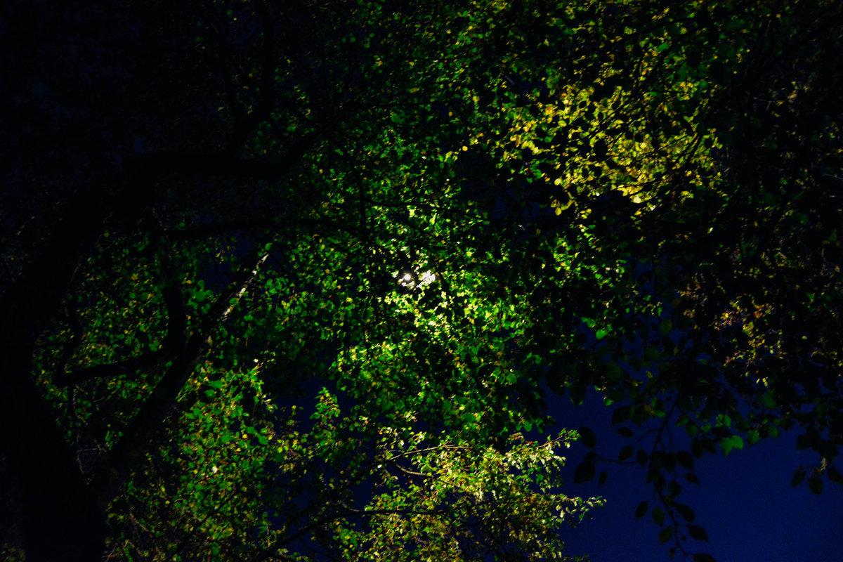 Луна и ветки, ночь прекрасна - Света Кондрашова