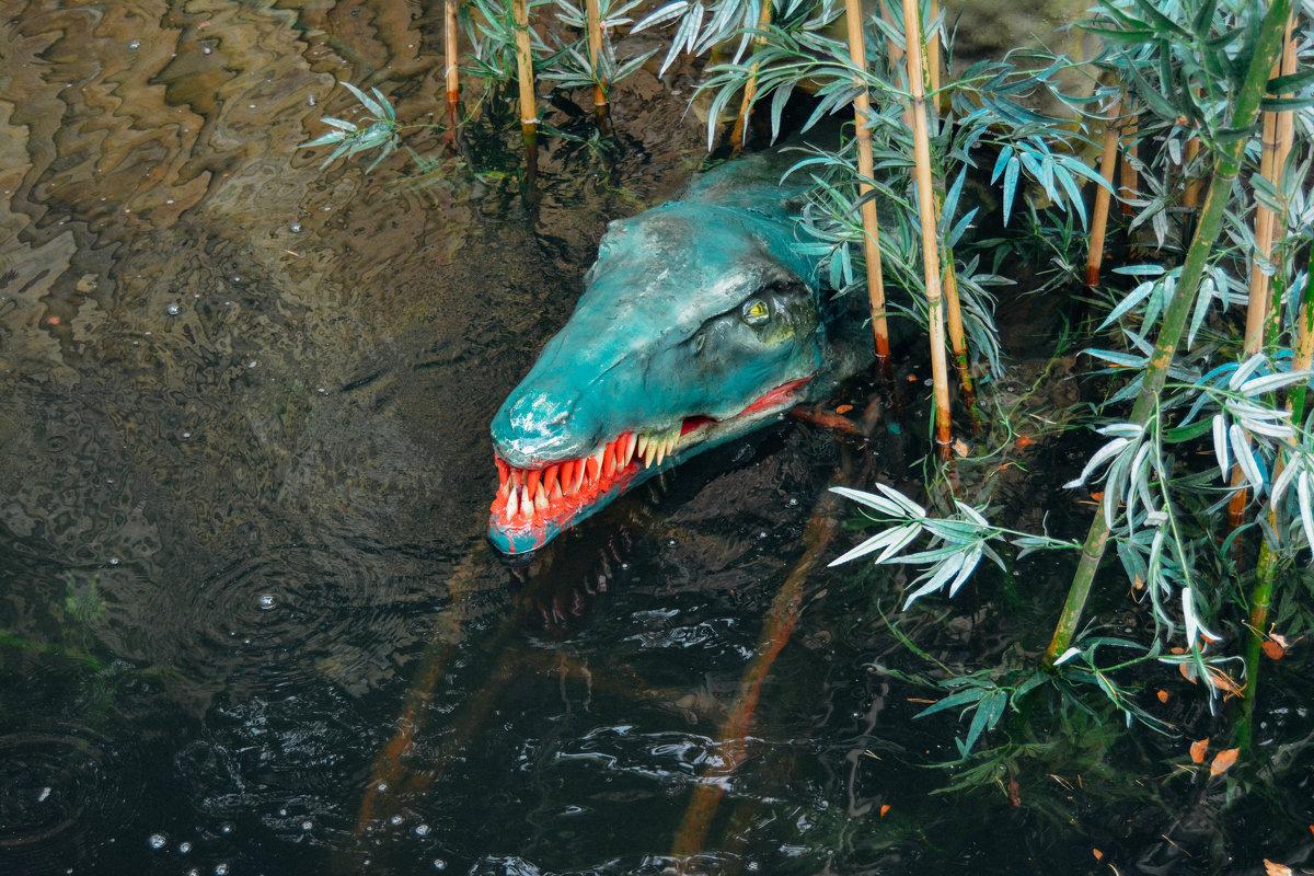 алигатор - Света Кондрашова