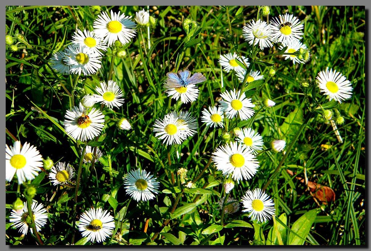 солнечный осенний день ... - Ivana