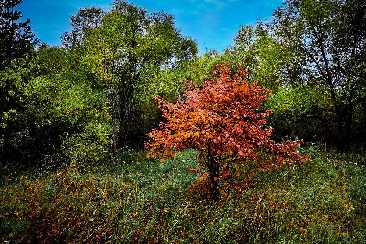 Осенний контраст - Марк