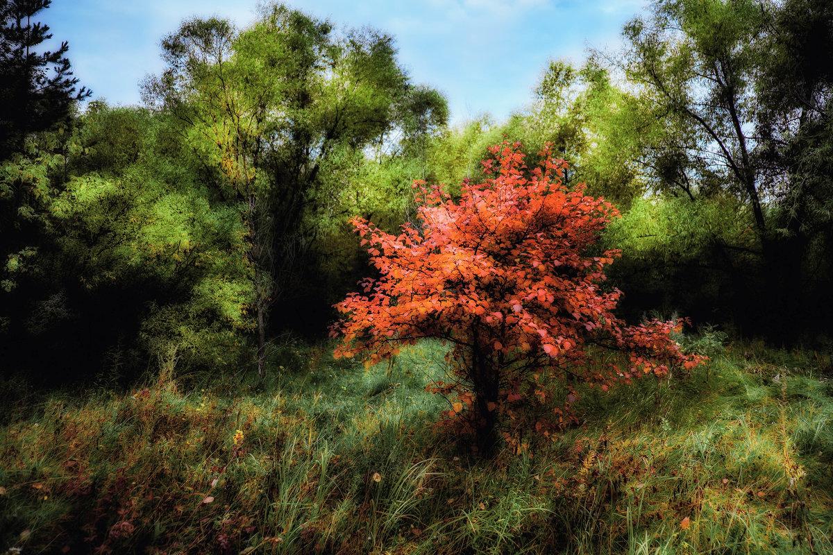 Осенний контраст - Марк Э