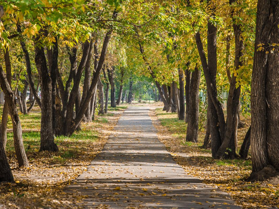 Осень - andrey