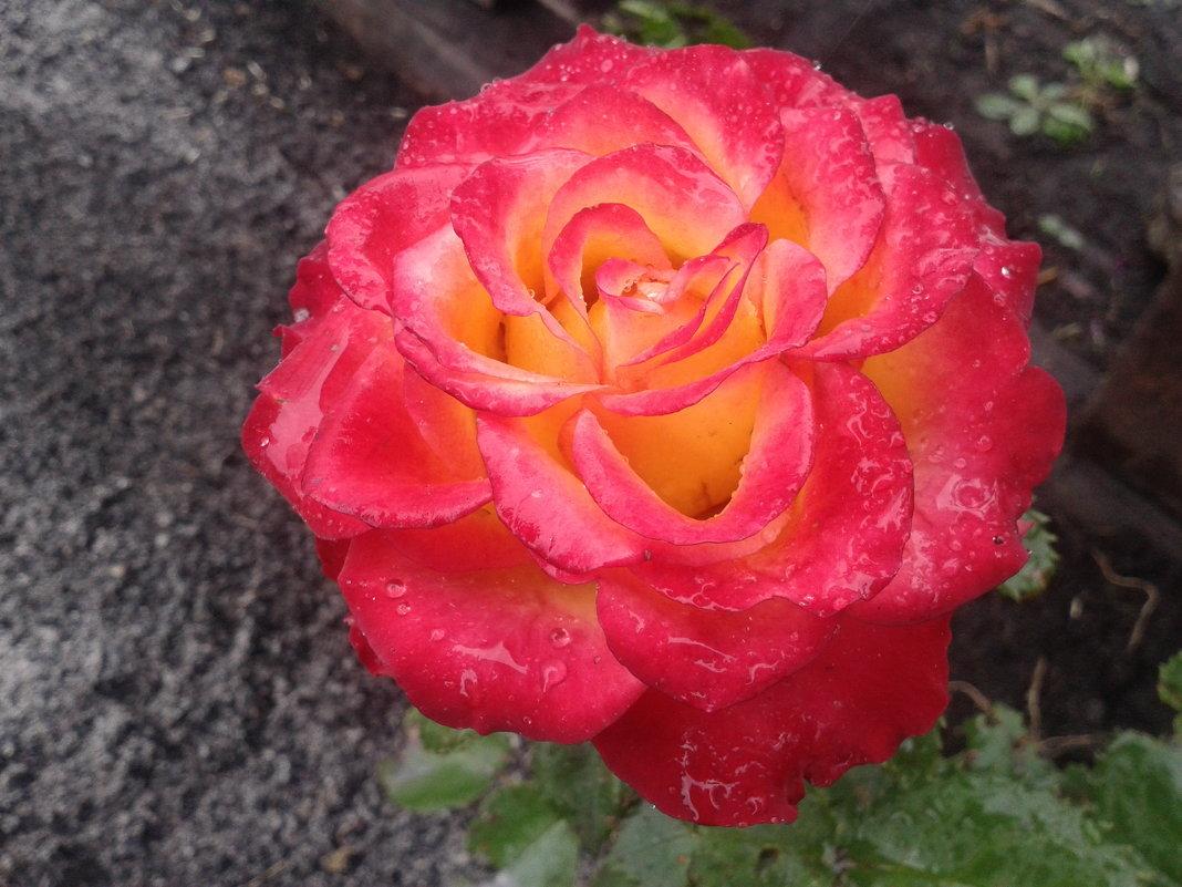 осеннее цветение - Татьяна