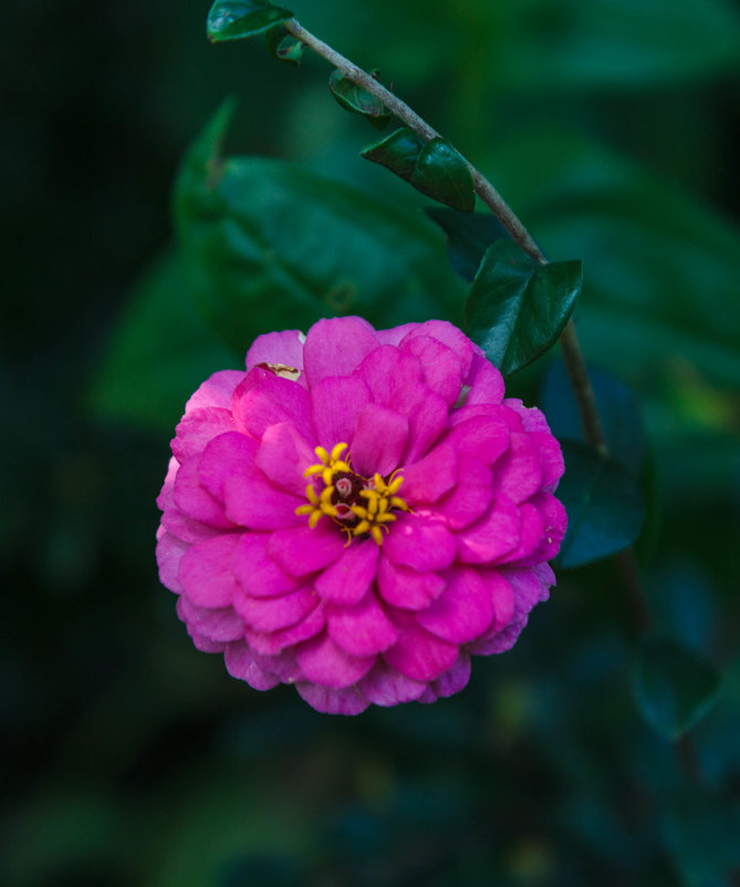 Цветочки в цветочке. - Андрей Нибылица