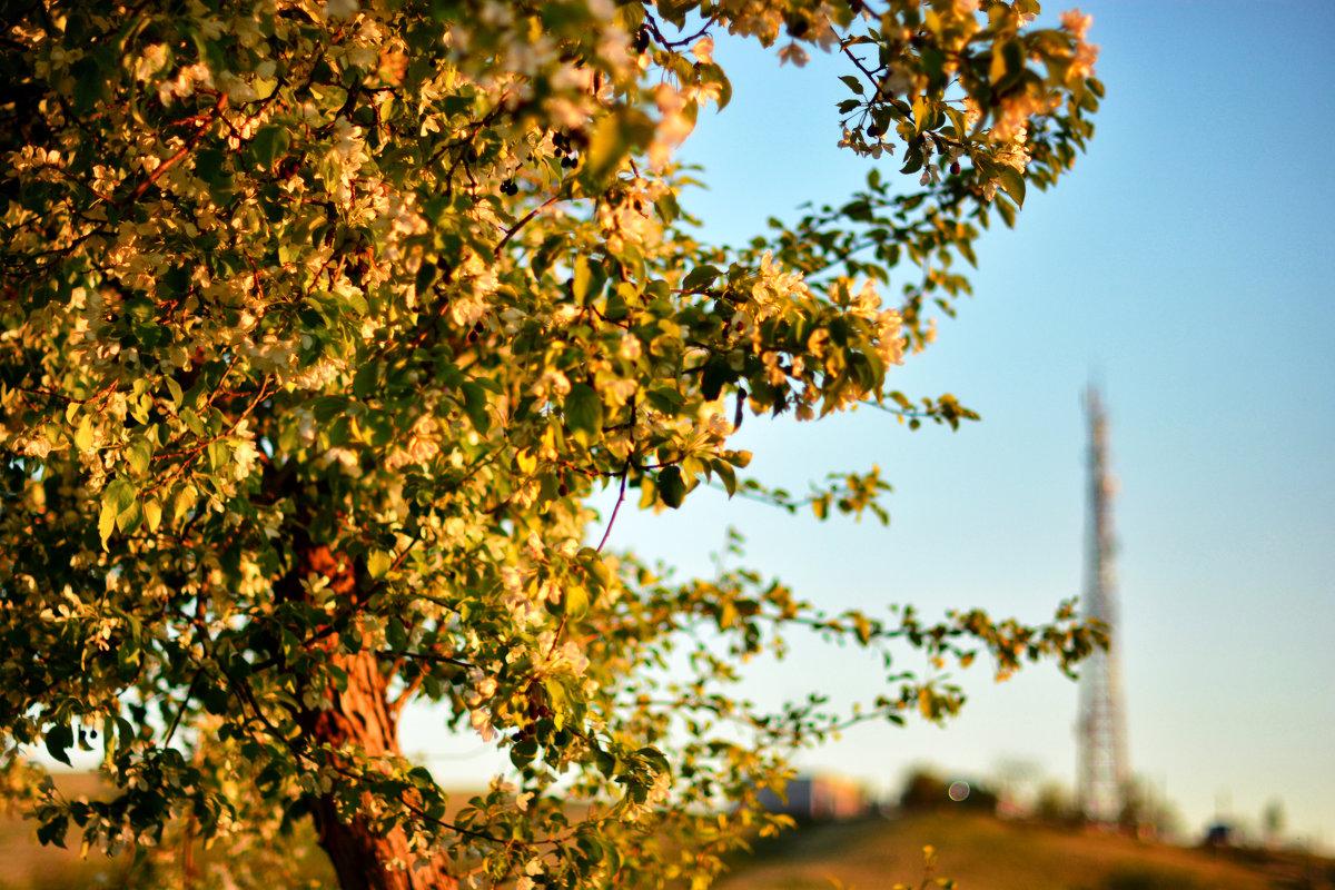 Яблоня на закате - Юрий Фёдоров
