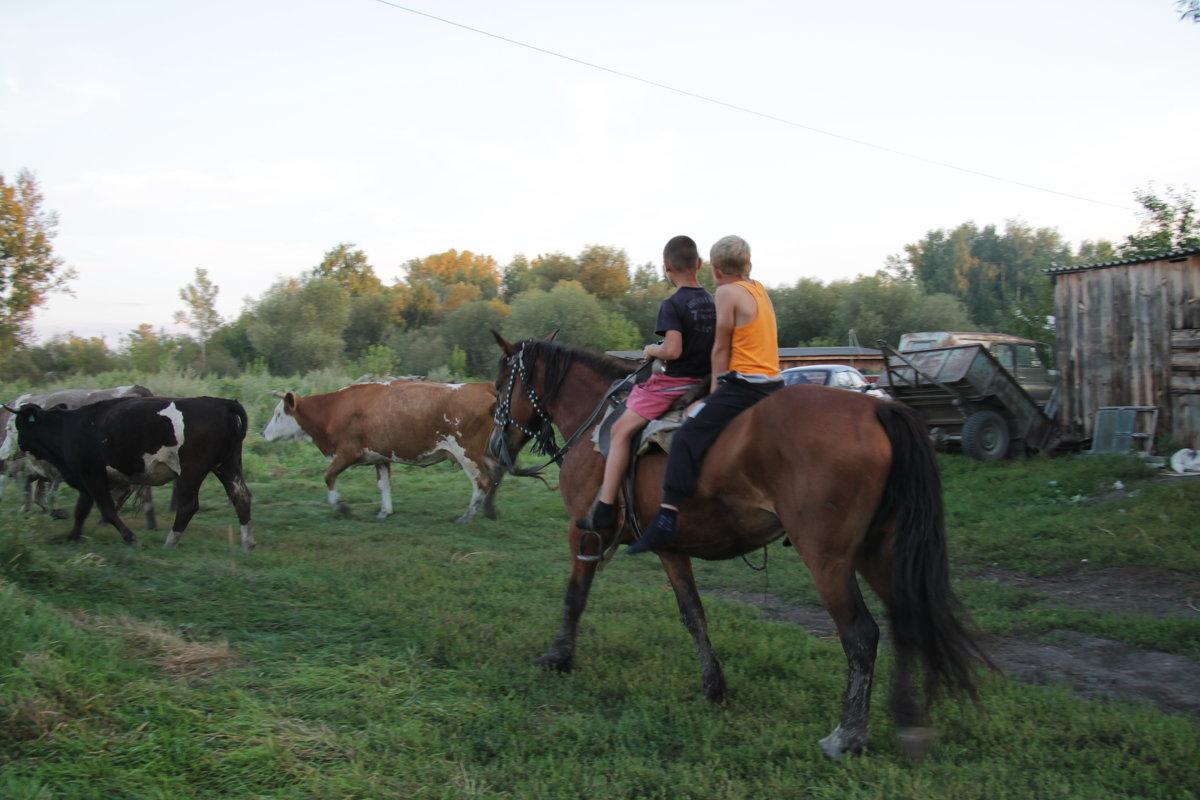 Домой с пастбища - Олег Афанасьевич Сергеев