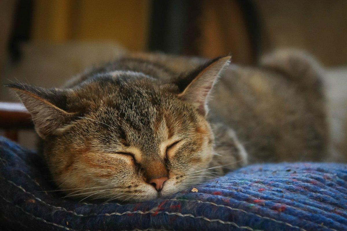 Спящая красавица - Наталья Мальцева