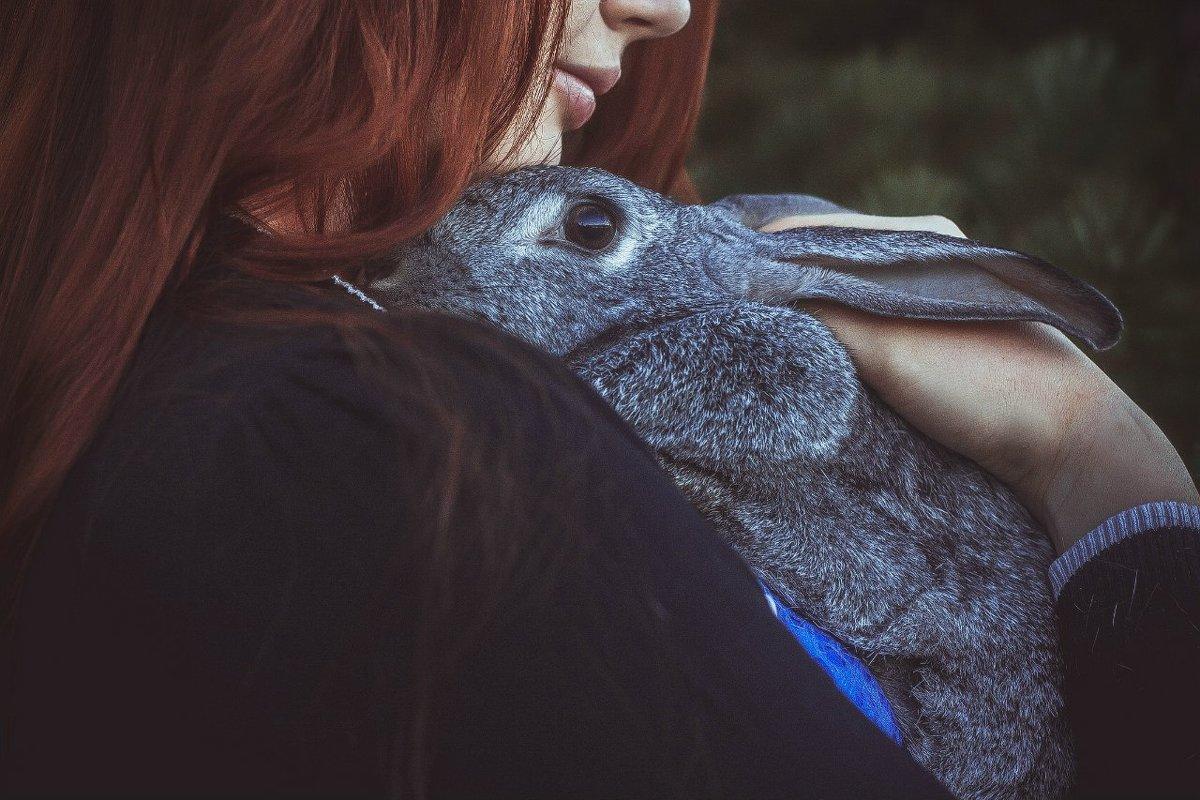 Кролик - Наталья Мальцева