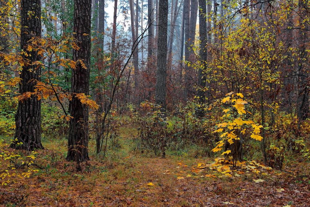 Словами грусти опадают листья... - Лесо-Вед (Баранов)