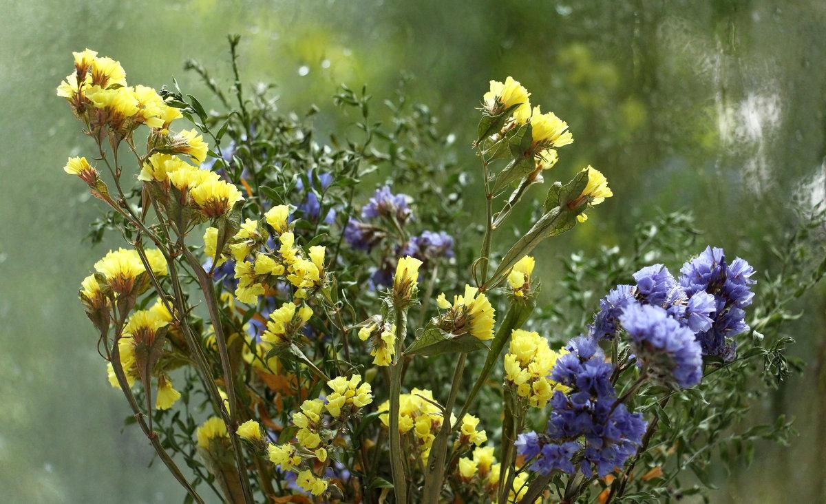 Полевые цветы - Dr. Olver  ( ОлегЪ )