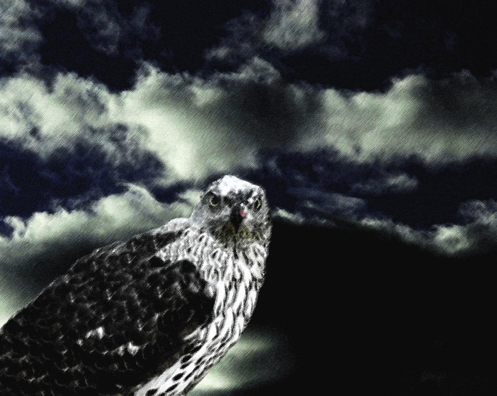 птица - Юлия Денискина