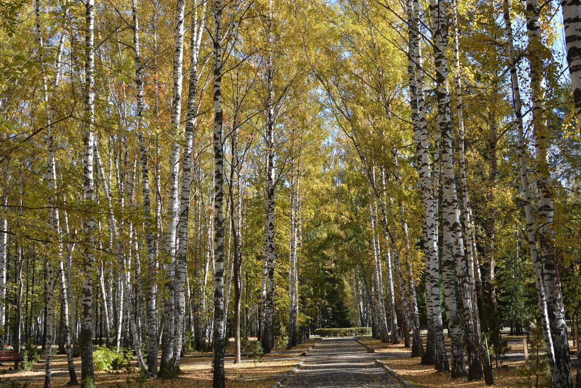 Золотая осень - grovs