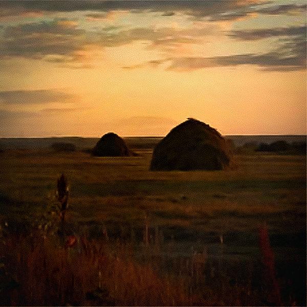Вечер на поле - Лариса Димитрова
