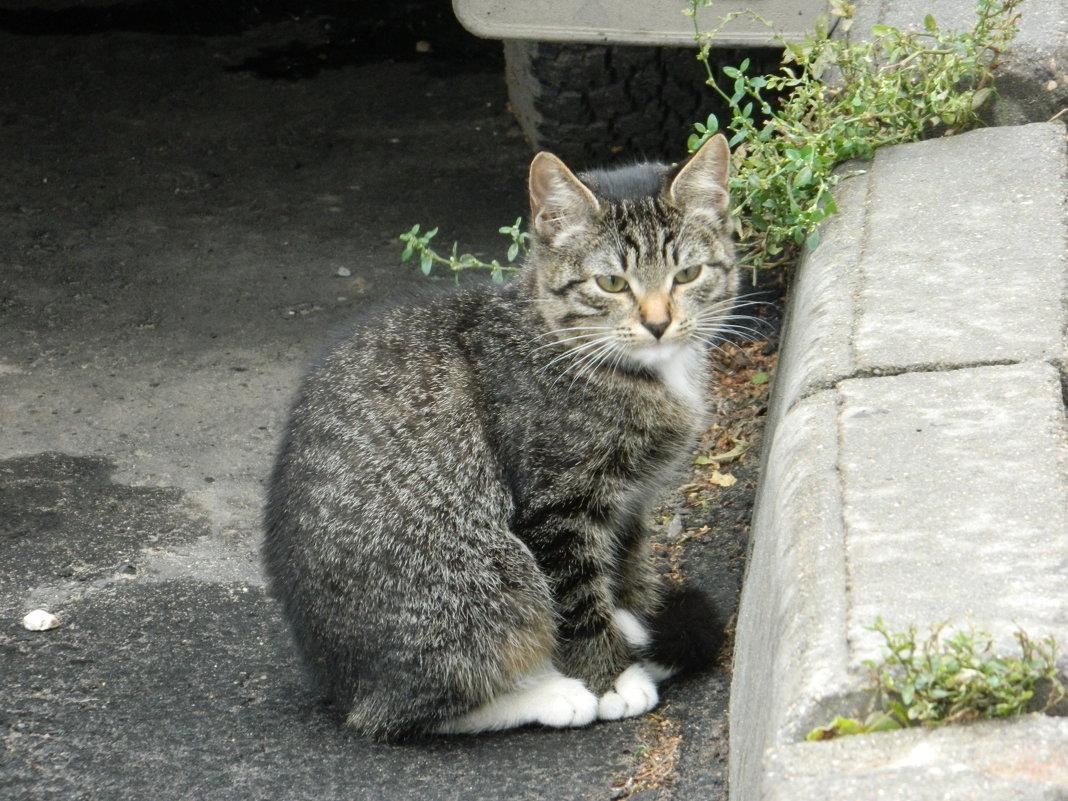 котенок - Andrew