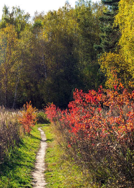 Теплая осень - Владимир Лазарев