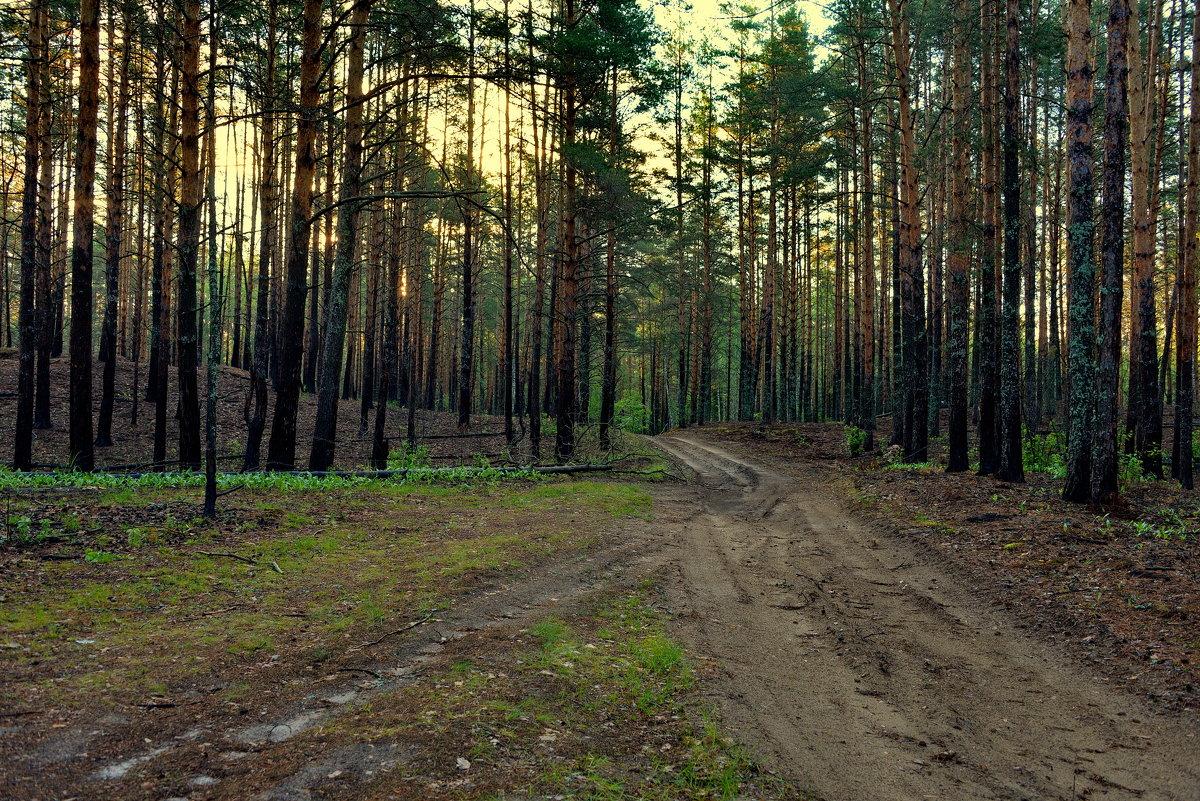 В лесу - Владимир Брагилевский