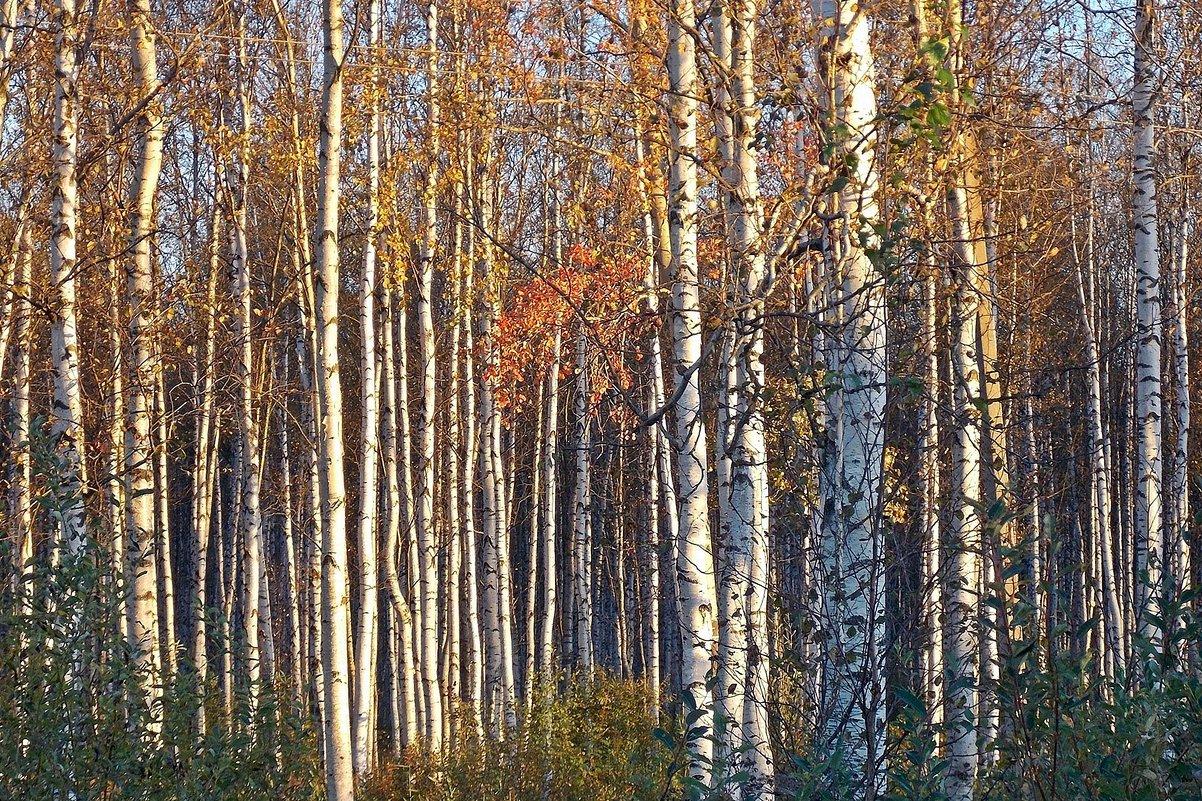Осенняя роща - Фотогруппа Весна.