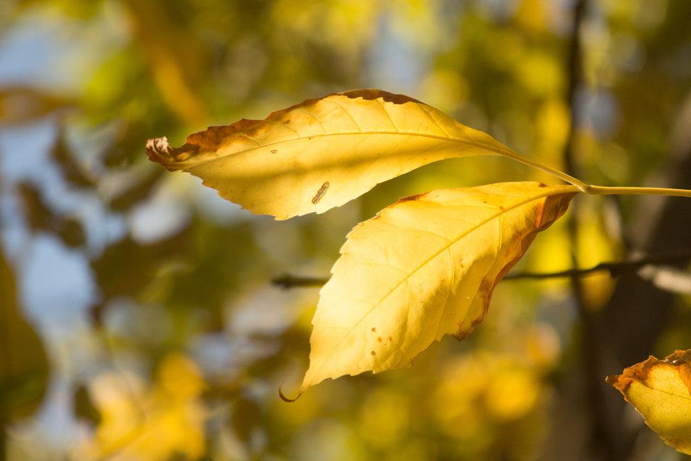 солнечная осень - Надежда Щупленкова