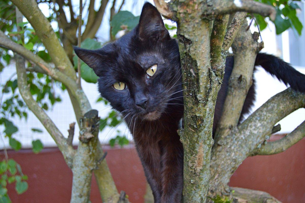 Жил да был черный кот... - Vladimir Semenchukov