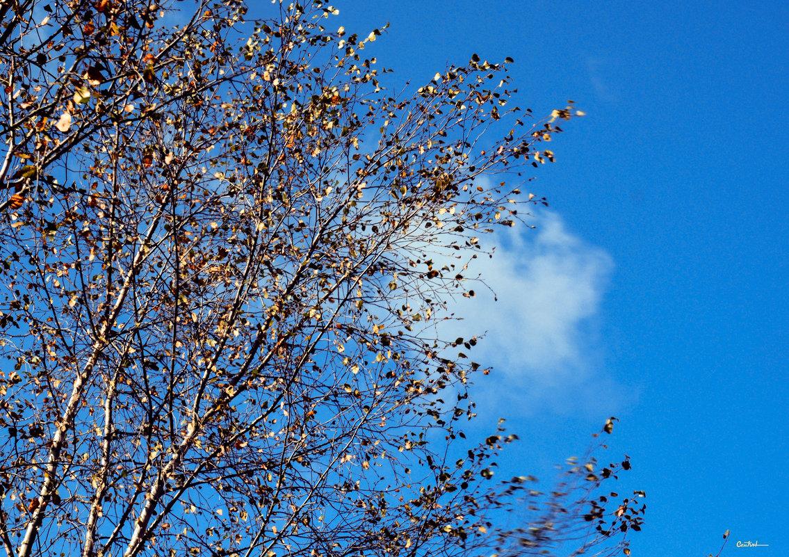 Осень...через оконное стекло - Юрий