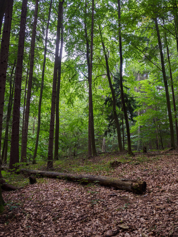 Лето в лесу - Alex Molodetsky
