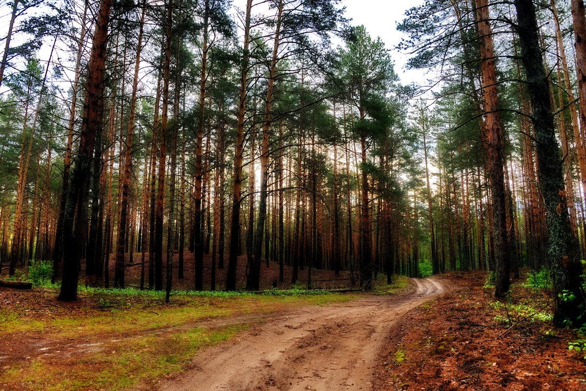 Утро в лесу - Владимир Брагилевский