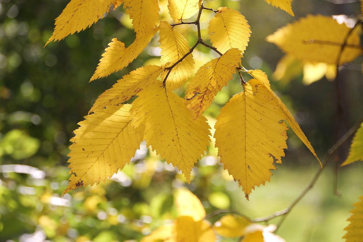 Осенние листья шумят и шумят в саду.... - Tatiana Markova