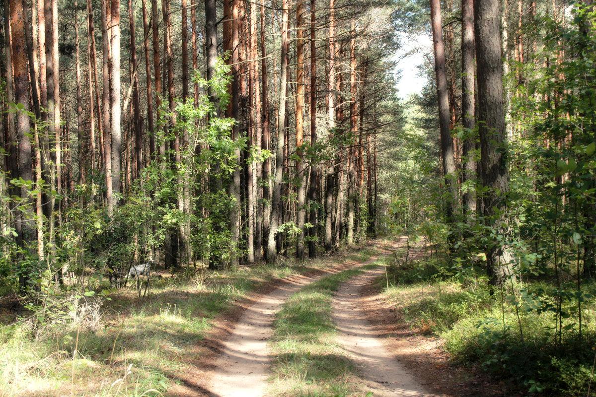 Летний полдень в лесу. - Инна Малявина