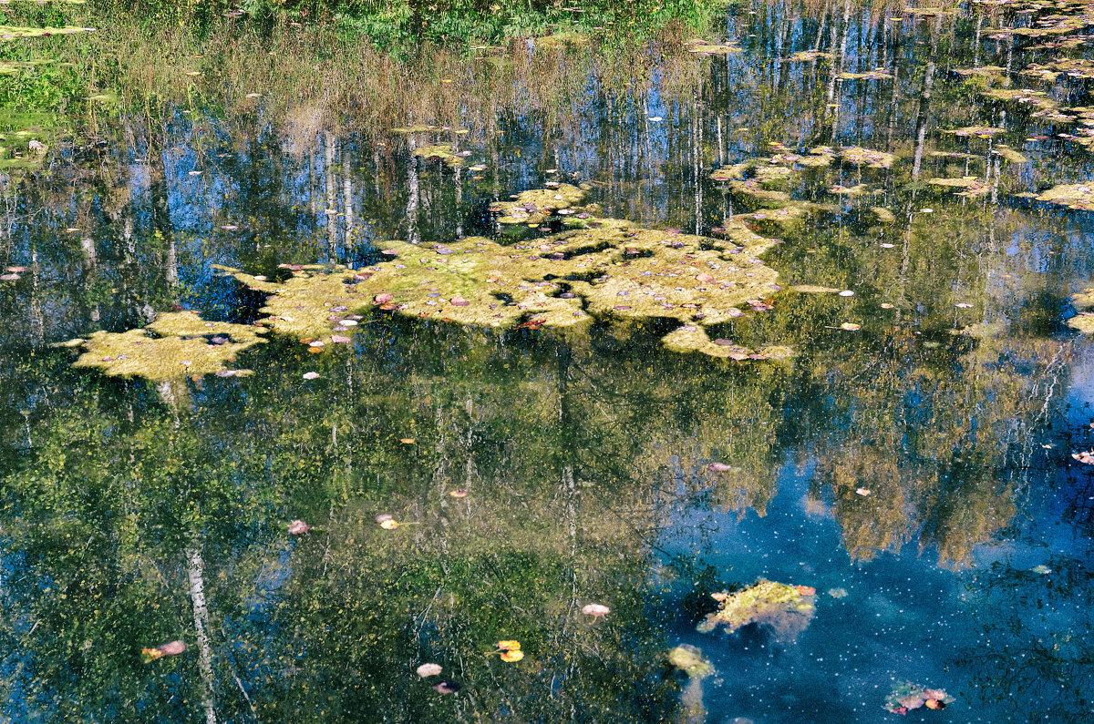 Просто тина в озере понравилась - Дмитрий Конев