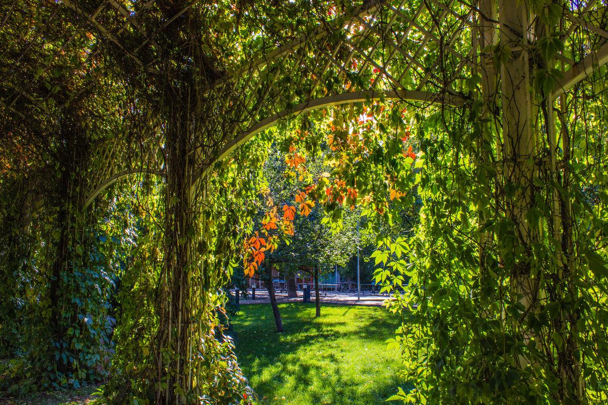 Осень пришла в парки Москвы. - Владимир Безбородов