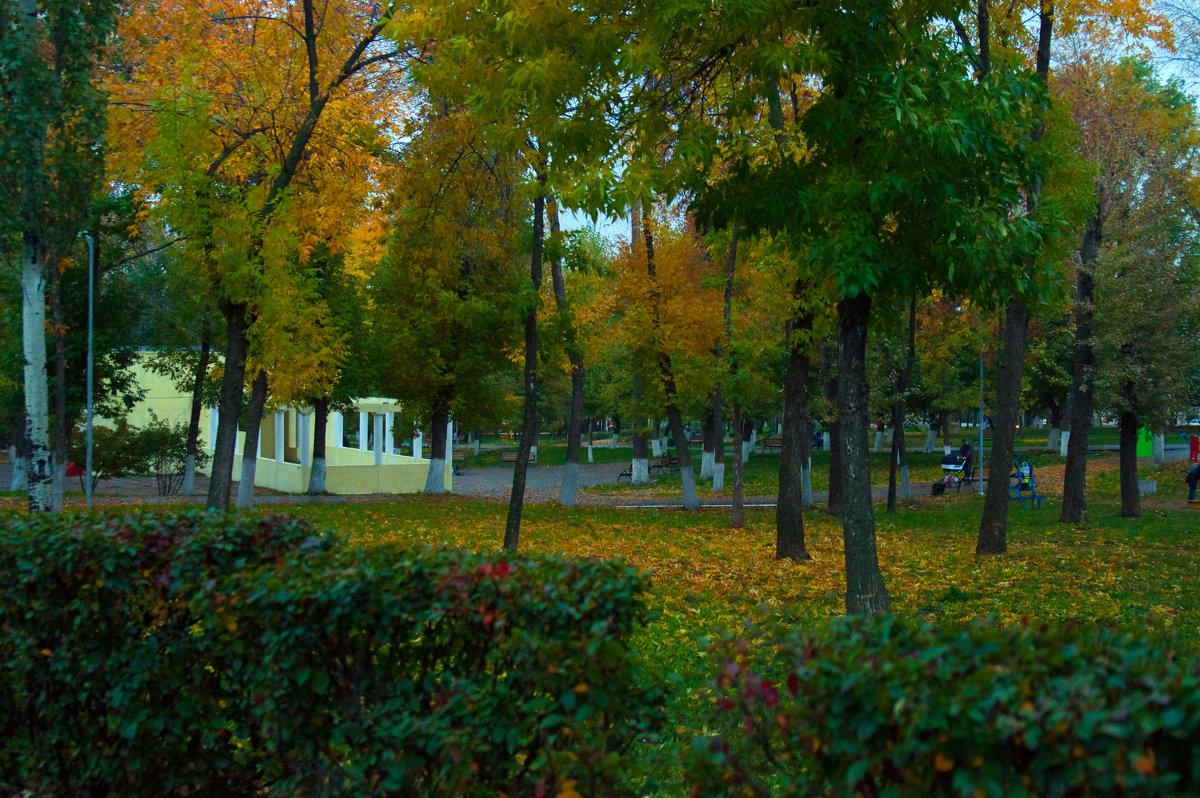 Вечерний парк осенью - Albina
