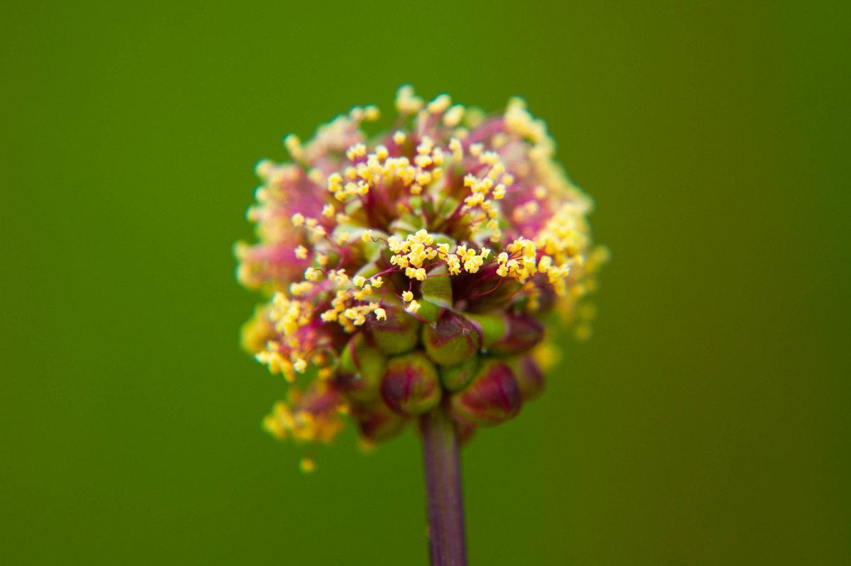 цветочек-шар - Олеся Енина